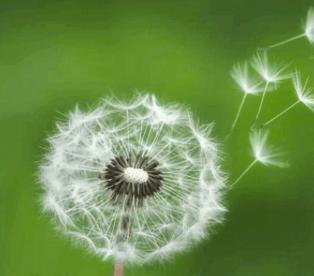 mindfulness voor onderwijspersoneel